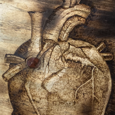 The Heart - A Study